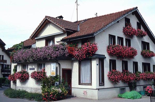Цветы под окном многоэтажного дома